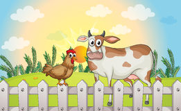 A cow and a rooster Stock Photography