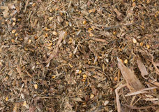 Cow`s feed silage Stock Photos