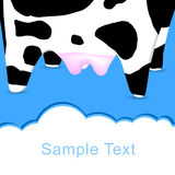 Cow's postcard for text input. Royalty Free Stock Photo