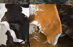 Cow's skins selling Royalty Free Stock Image