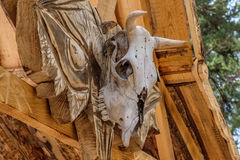 Cow`s skull on the boards. Side view Stock Photography