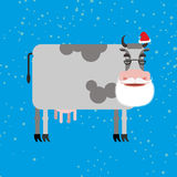 Cow Santa Claus. Farm animal with beard and moustache. Christmas. Cap. Funny cattle for new year Royalty Free Stock Photography