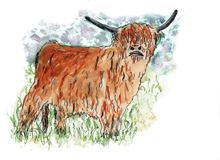 A cow, a Scottish highlander, hand painted in watercolor and ink. Royalty Free Stock Images
