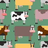 Cow seamless pattern. Background of  animals. Herd of cows Farm Stock Photos