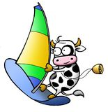 Cow series - windsurf. Funny milky cow making windsurf Stock Photography