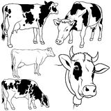 Cow Set. 02 - black hand drawn illustration as vector Royalty Free Stock Photos