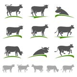 Cow set. Vector Royalty Free Stock Photography