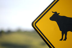 Cow Sign -- No Bull!!. A close view of a crossing cattle sign with out of focus ranchland in the distance Stock Image