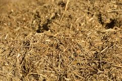 cow silage Stock Photos