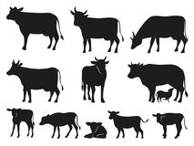 Free Cow Silhouette. Black Cows And Calf Mammal Animals Vector Icons Set Stock Photos - 157562723