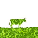 Cow silhouette  graze in the field, landscape, grass, pasture. green  background.  Vector Stock Image