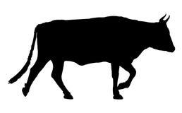 Cow silhouette Royalty Free Stock Photos