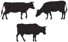 Cow silhouettes Royalty Free Stock Photos