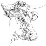 Cow - sketch Stock Photography