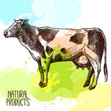 Cow Sketch Illustration Royalty Free Stock Image