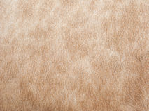 Cow skin background Stock Images