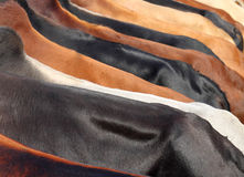 Cow skin surfaces Stock Photo