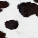 Cow skin texture Stock Image