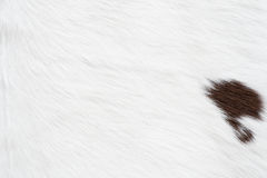 Cow skin texture Royalty Free Stock Photography