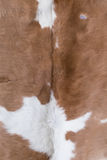 Cow skin texture Stock Images
