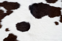 Cow skin texture Royalty Free Stock Image