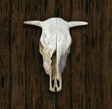 Cow Skull Royalty Free Stock Photos