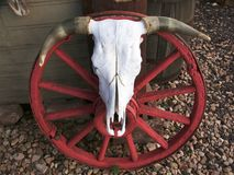 Cow Skull. Old horse-drawn wagon wheel with cow skull Stock Photos