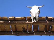 Cow skull. On a gate against clear blue sky Stock Photography
