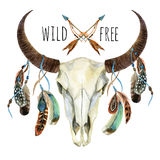 Cow skull. Animal skull with feathers Royalty Free Stock Photo