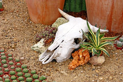 Cow skull. As a decorative element in the garden Royalty Free Stock Photography