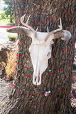 Cow skull hanging on a tree with red Christamas lights Royalty Free Stock Images