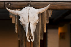 Cow Skull on Porch Royalty Free Stock Photography