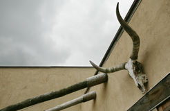 Cow Skull and Sky. A cow skull hanging on the wall against a cloudy sky Stock Photo