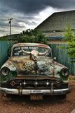 Cow skull on vintage car Stock Photography