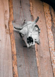 Cow skull on wooden wall Stock Image