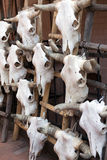 Cow skulls for sale Royalty Free Stock Images