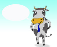 Cow smile Stock Images
