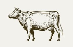 Cow standing, view profile. Farm animal, beef, milk. Sketch vector illustration. Cow standing, view profile. Farm animal, beef milk Vector illustration vector illustration