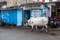 Cow on the street of Indian town Royalty Free Stock Photos