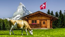 Cow in Switzerland royalty free stock photography