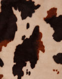 Cow texture background. Black and white spots Royalty Free Stock Photos