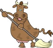 Cow using a mop Stock Photos