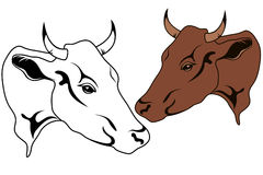 Cow vector Stock Images