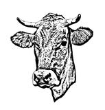 Cow vector. Silhouette of a cow's head Royalty Free Stock Photos