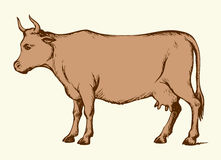 Cow. Vector drawing Royalty Free Stock Images