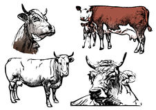 Cow vector illustrations Stock Photos