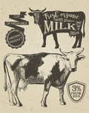 Cow vintage graphic Stock Image