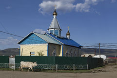 Cow walking next to the church. Royalty Free Stock Photography