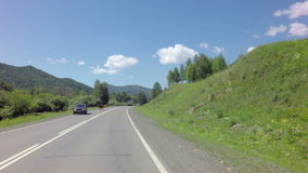 Cow walking on the road. Chuysky Trakt in the Altai Mountains stock video