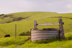 Cow and Water Tank Stock Photo